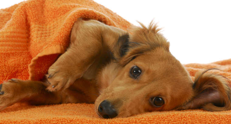 Simple steps to care for your dog