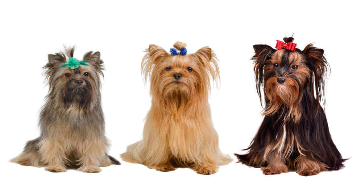 What happens when your dog is groomed?