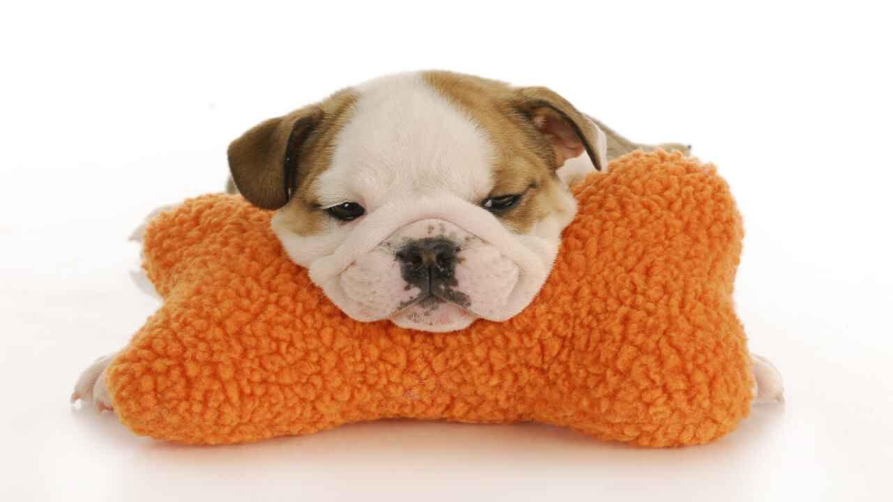 What are the must haves for your new puppy?